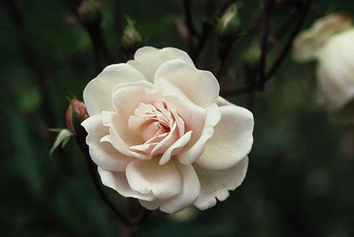 Rose Marie Pavic